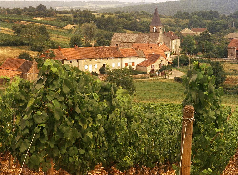 Maconnais vineyards, Poilly Fuisse, Ozenay, near Macon, Saone-et-Loire, Burgundy, France, Europe