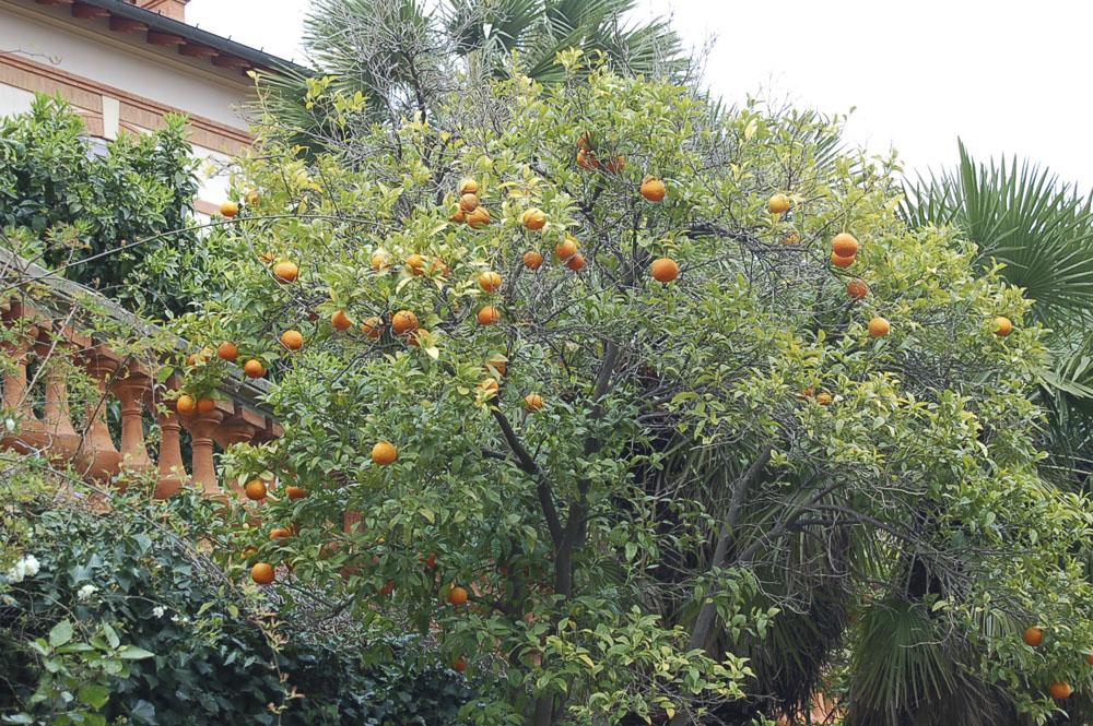 83_Bormes-les-Mimosas653
